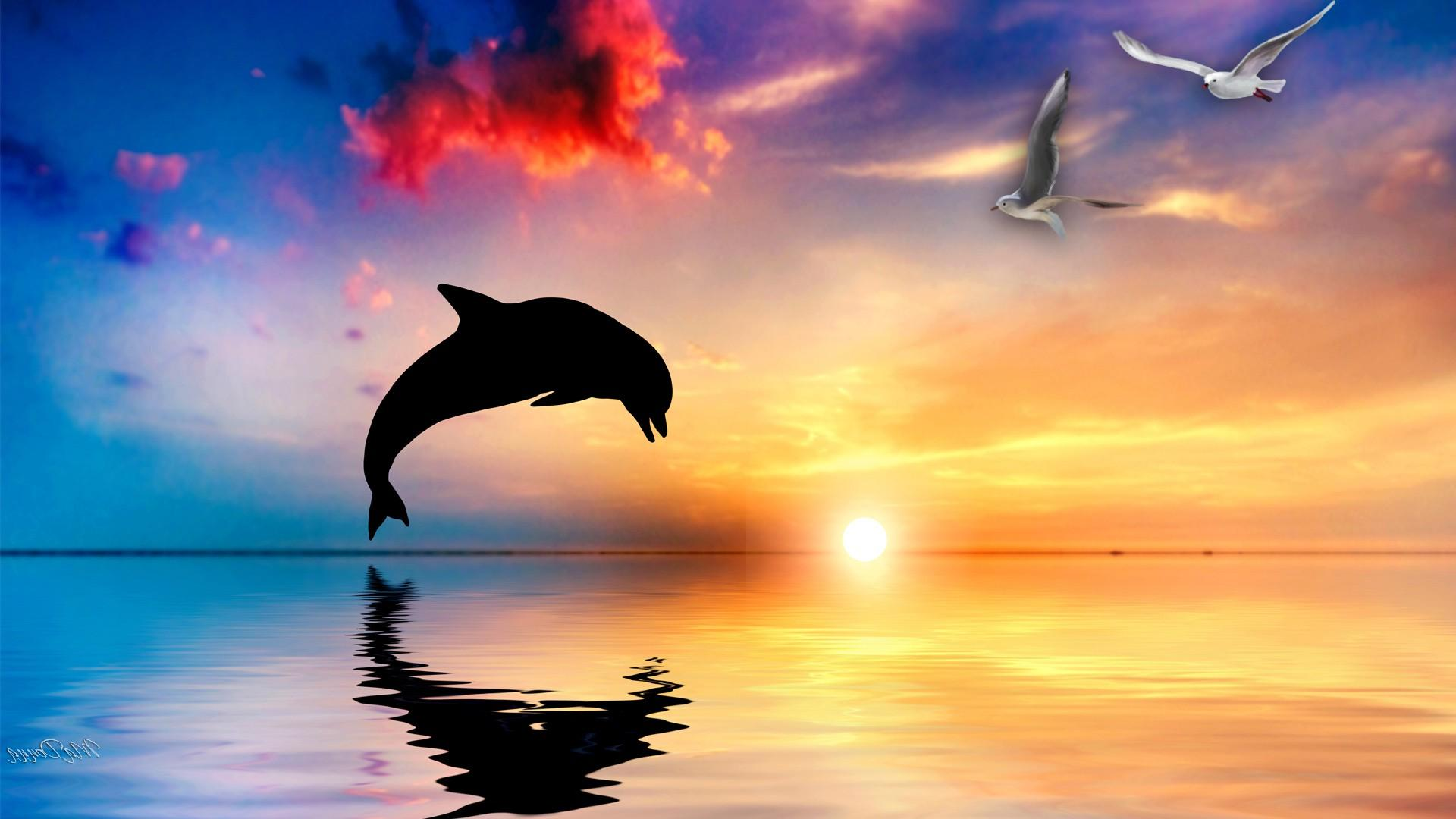 Dolphin Backgrounds 1920x1080