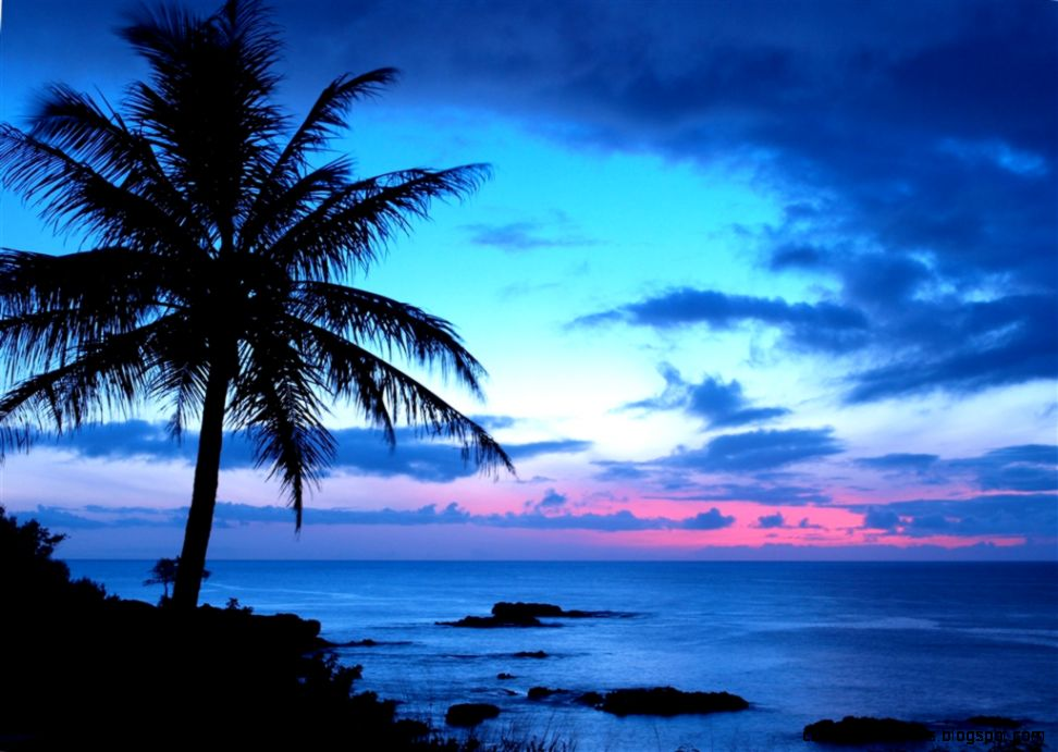 Tropical Sunset Wallpaper Zoom Wallpapers 972x691