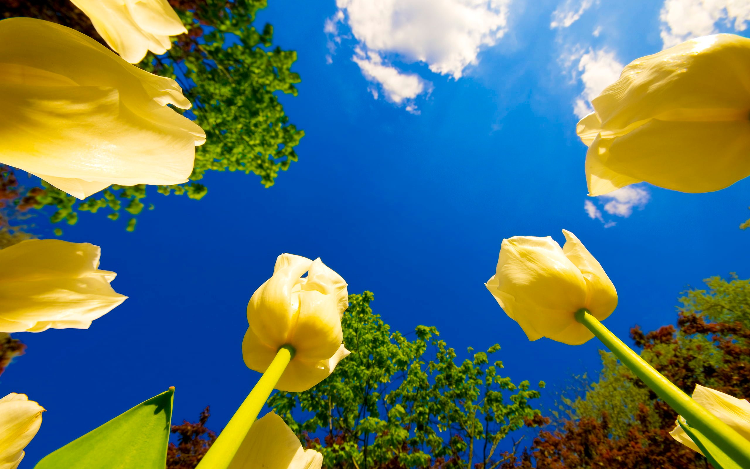 Yellow flowers in worms eye photography HD wallpaper Wallpaper Flare 2560x1600