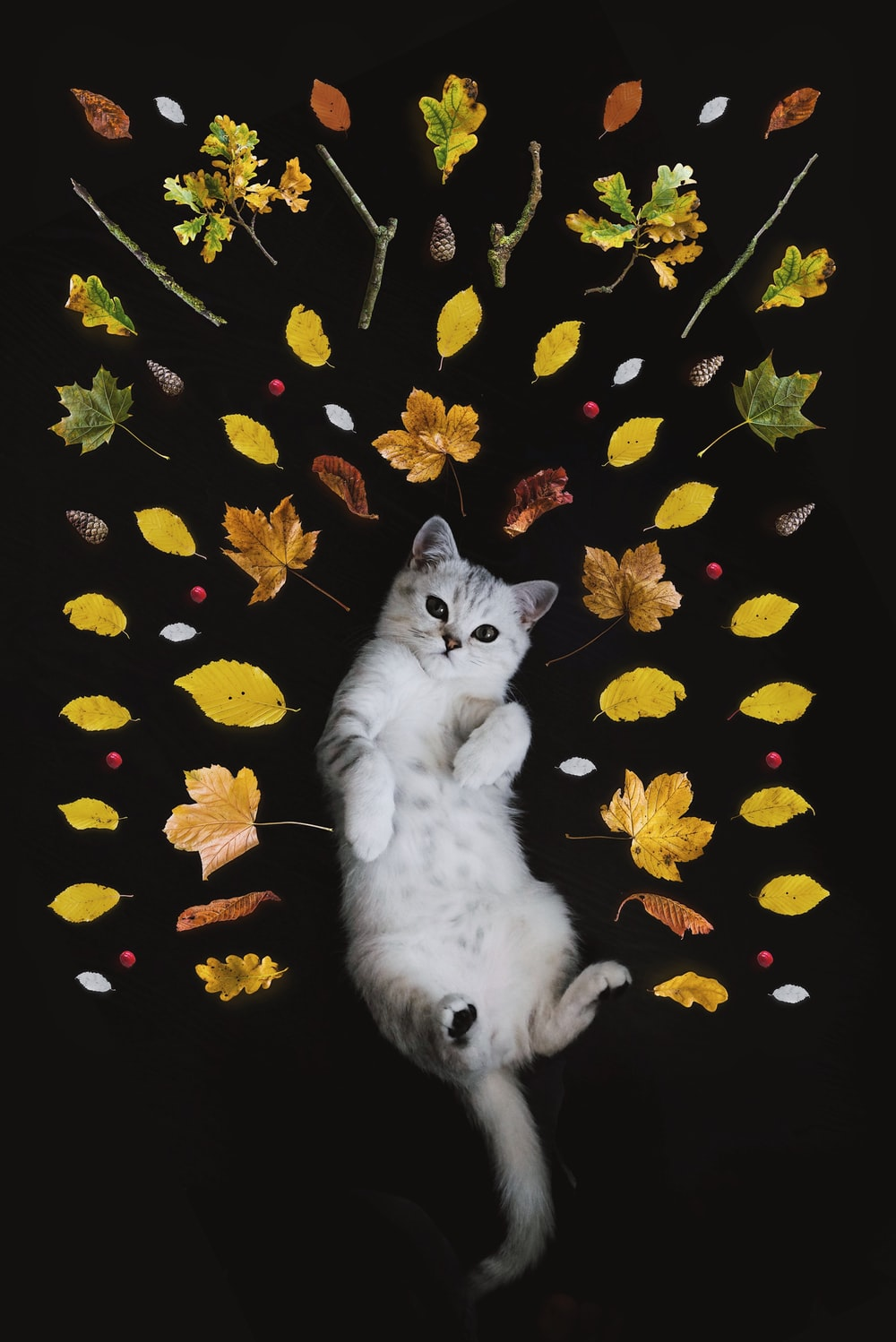Cat Wallpaper 44 best wallpaper cat pet and animal photos 1000x1498