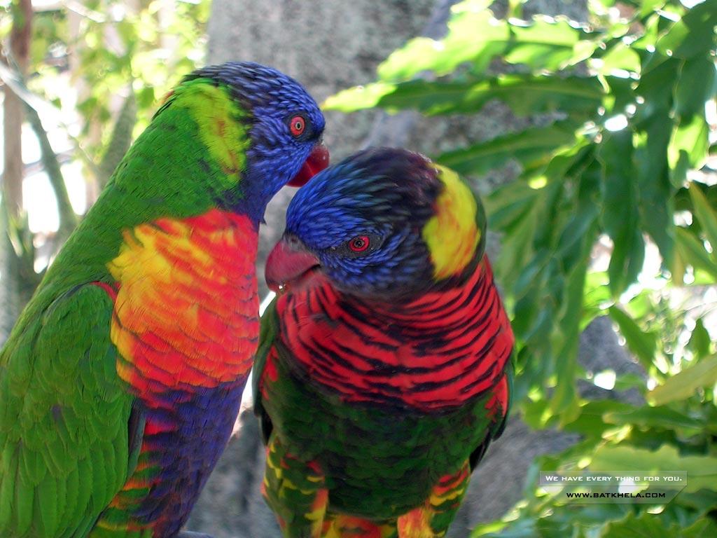 Beautiful Birds Wallpaper for desktop 1024x768