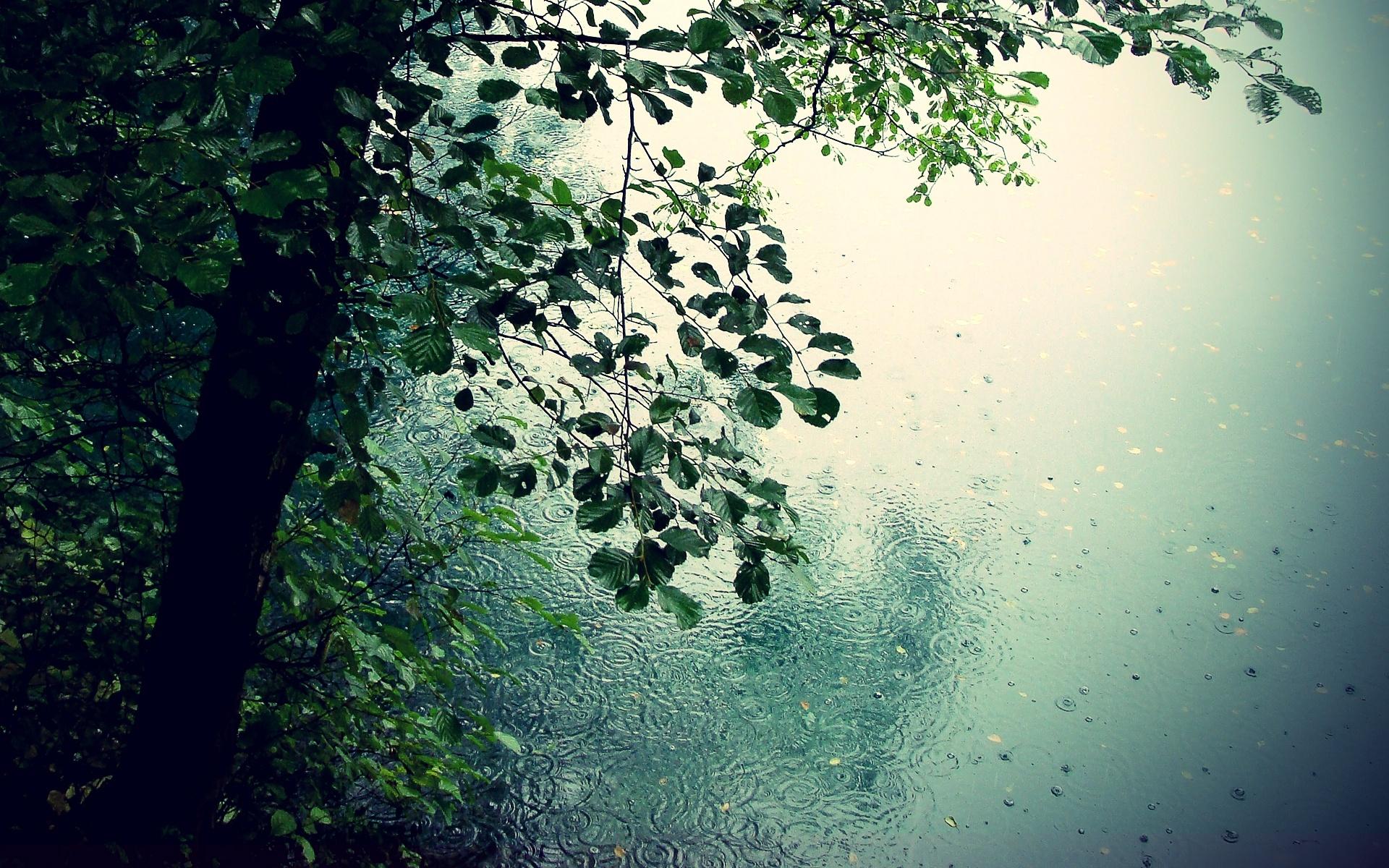 Beautiful Rain Wallpapers For Your Desktop 1920x1200