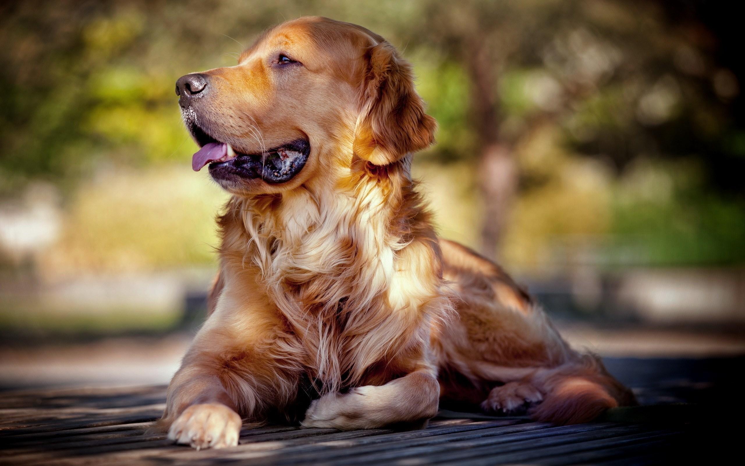 Pics Photos   Dog Desktop Wallpapers Wallpaper To 2560x1600