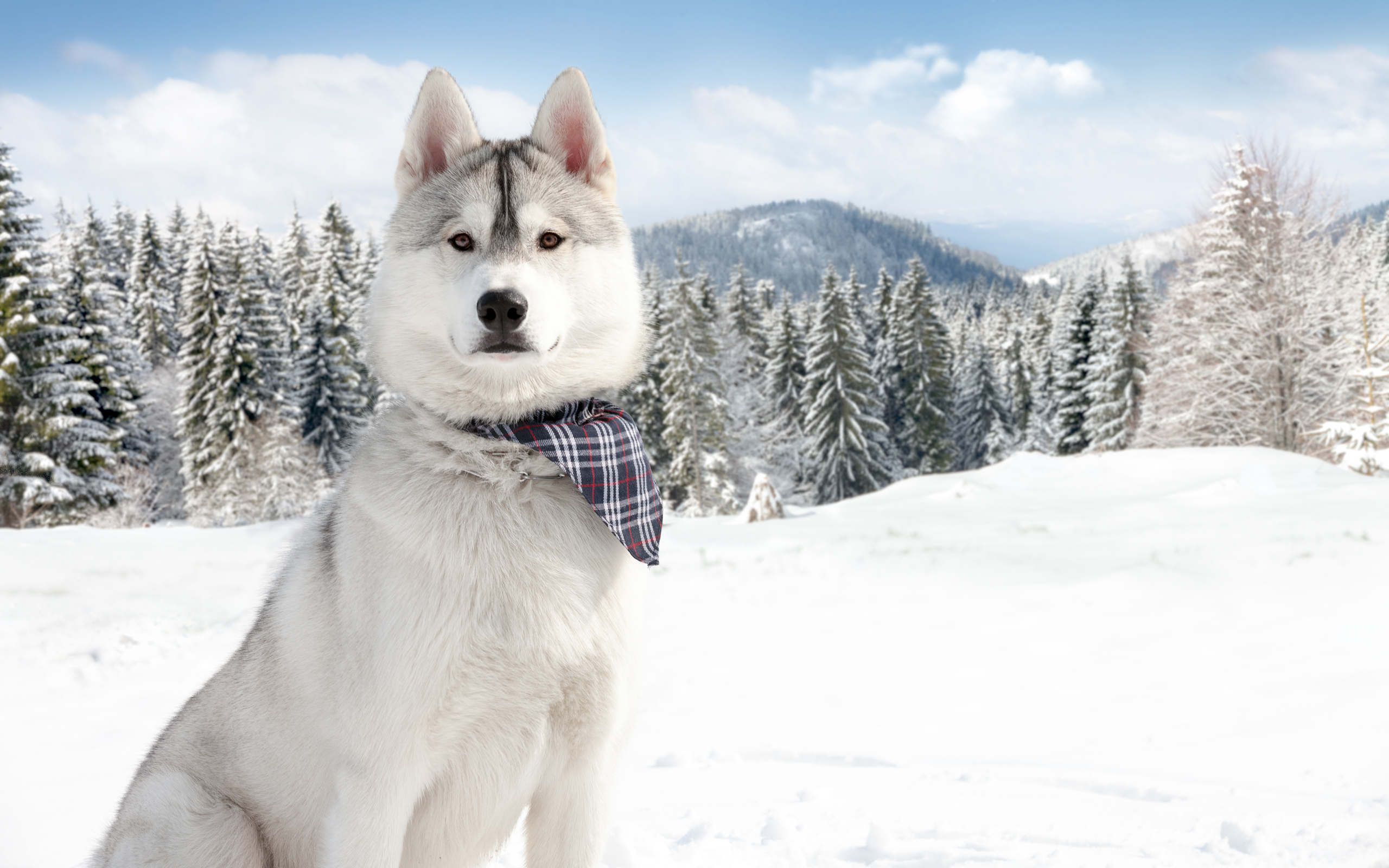 nature winter snow dogs wallpaper background 2560x1600