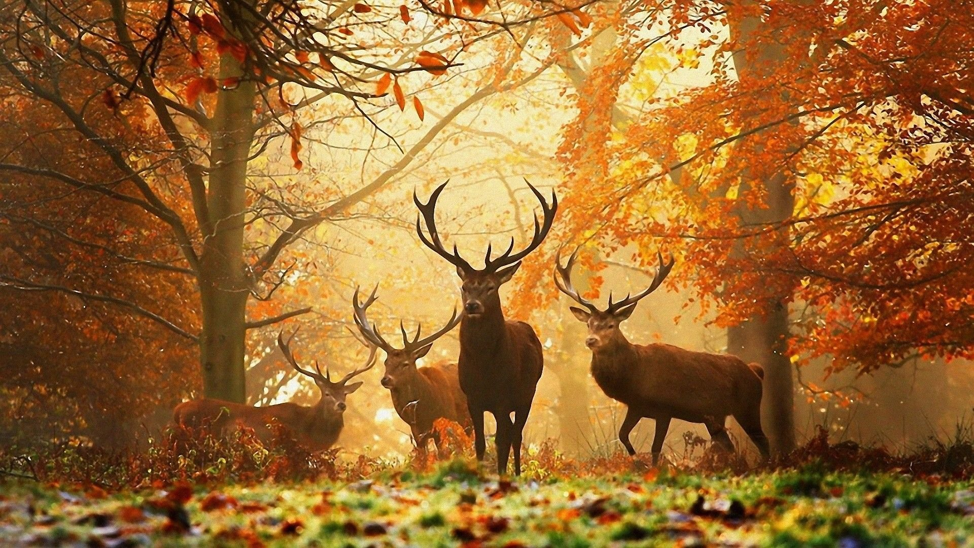 50 Best Autumn Desktop Wallpapers   Download at WallpaperBro 1920x1080