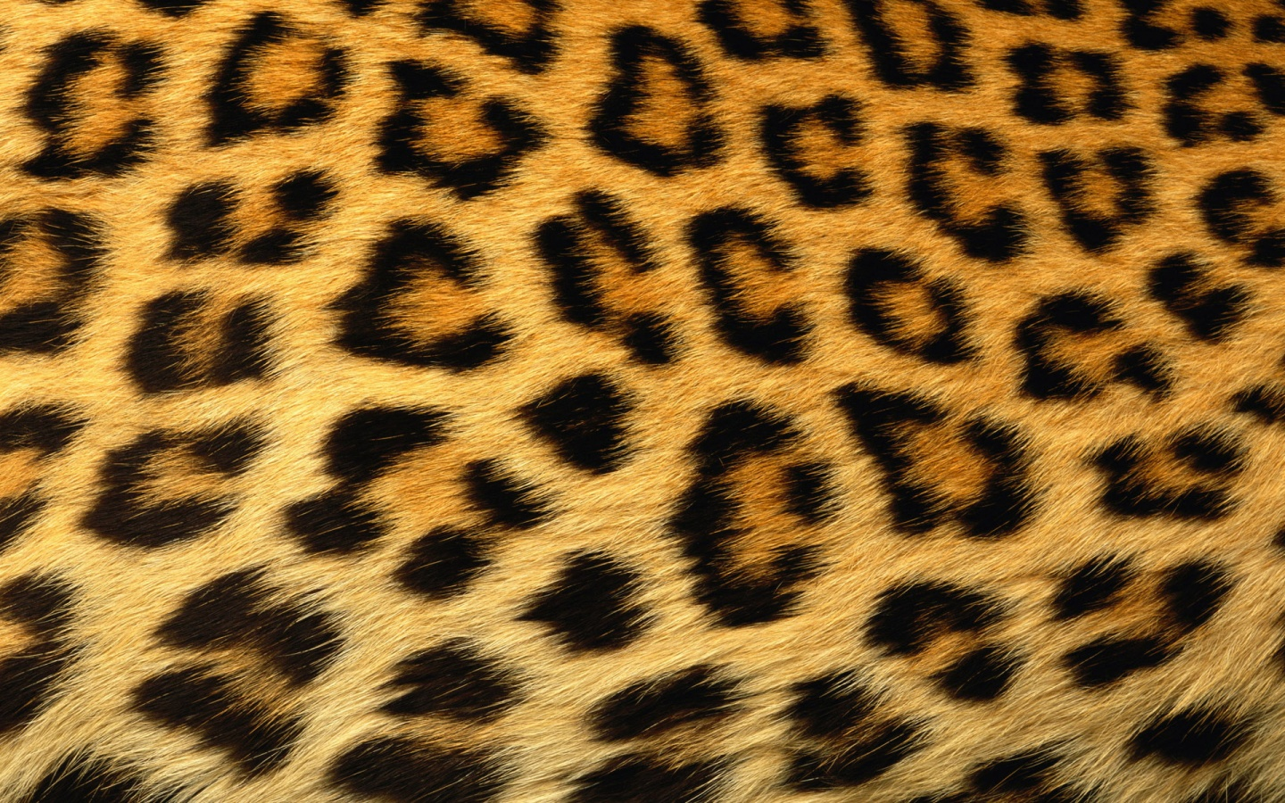 Leopard Print Background X Images at Clkercom 1440x900