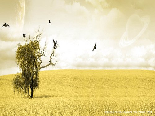 Yellow Wallpaper HD Sparknotes 500x375
