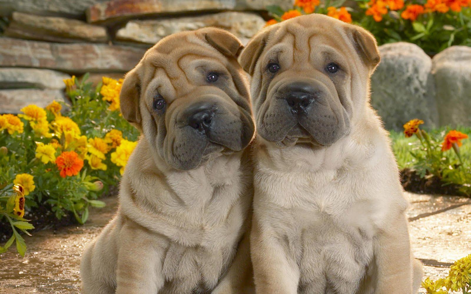 Funny Wallpapers Of Dogs Wallpapersafari