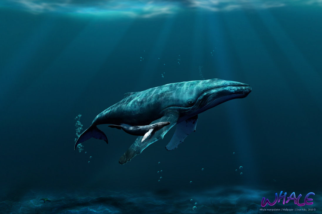 Whales Wallpaper by inankilic on deviantART 1096x728