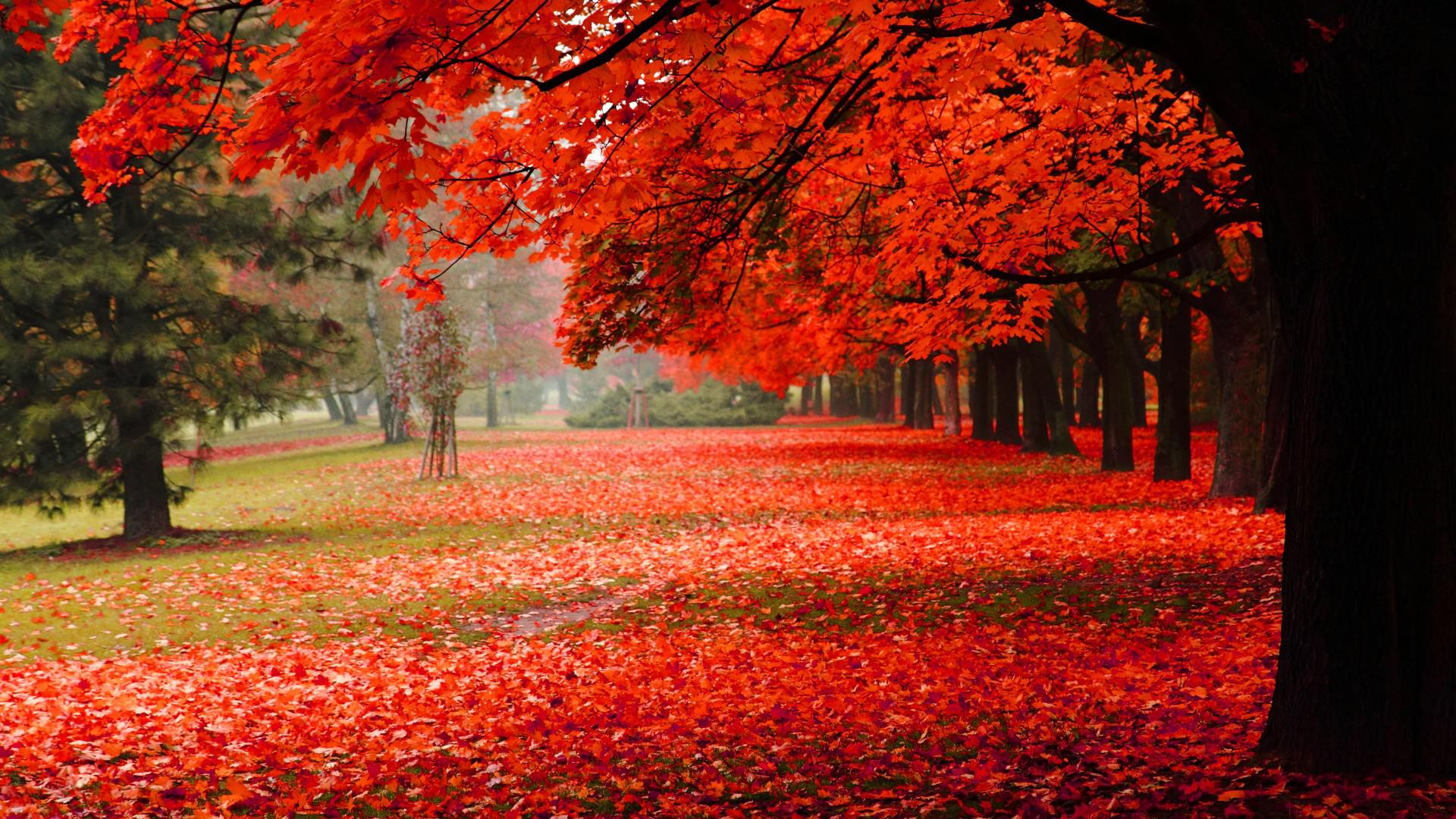 Free Download Autumn Nature Wallpapers Hd Pictures One Hd