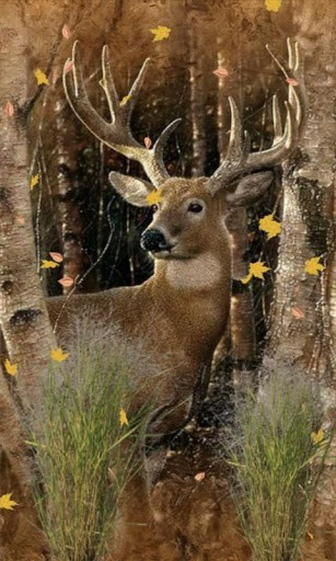 Deer Hunter Wallpaper on WallpaperSafari