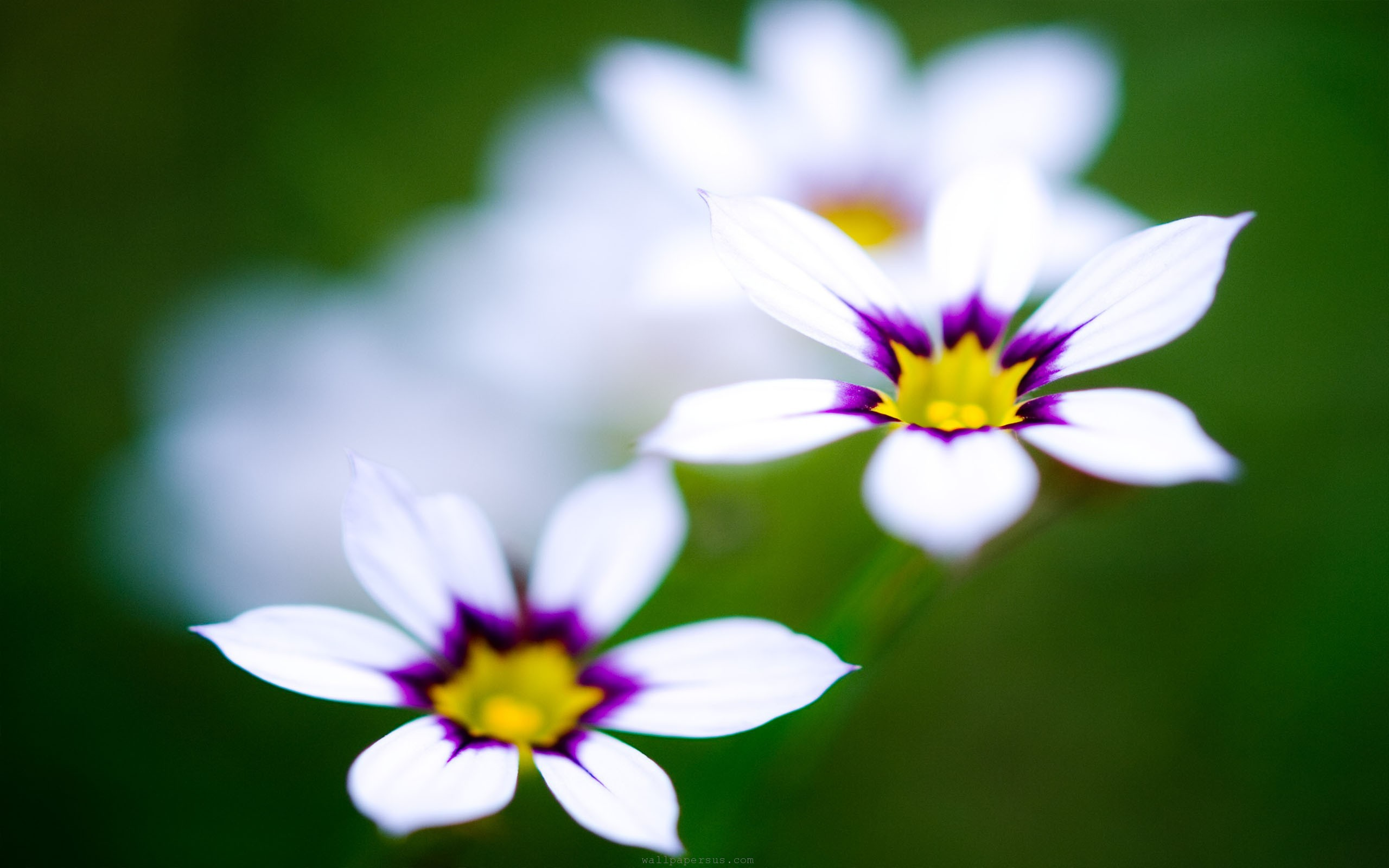 purple flowers cute wallpaper share this cute wallpaper on facebook 2560x1600