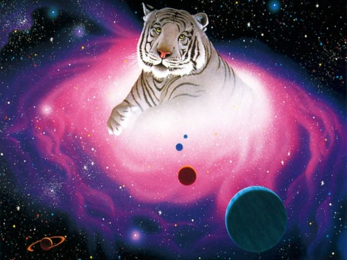 white tiger screensaver screensavers download william schimmel white 500x375