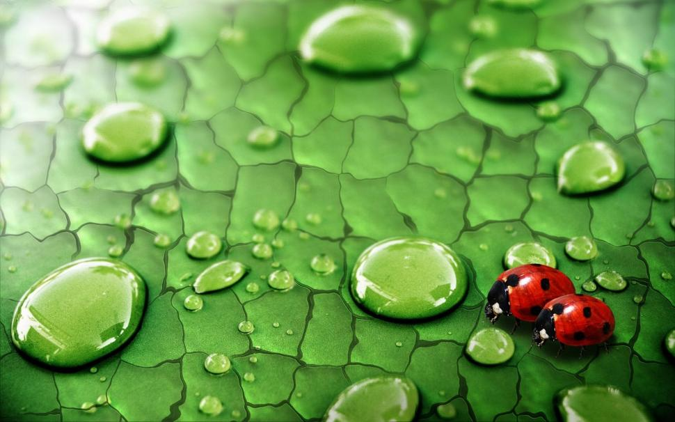 Green leaf water drops dew insects ladybirds wallpaper 970x606