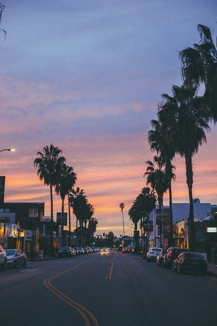 venice beach california sunset palm trees photography 750x1125