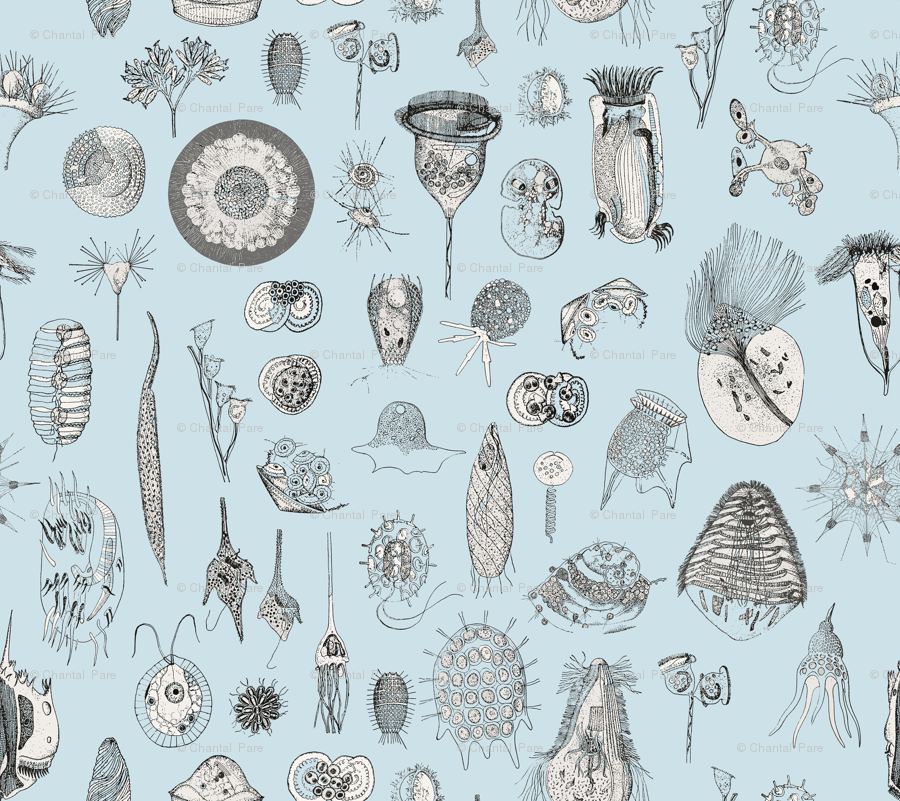 Giant Protozoa Bestiary Light Blue wallpaper   chantal pare 900x801