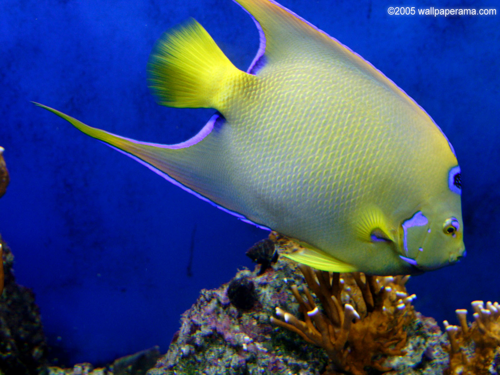 HD Tropical Fish Wallpaper - WallpaperSafari  HD Tropical Fis...