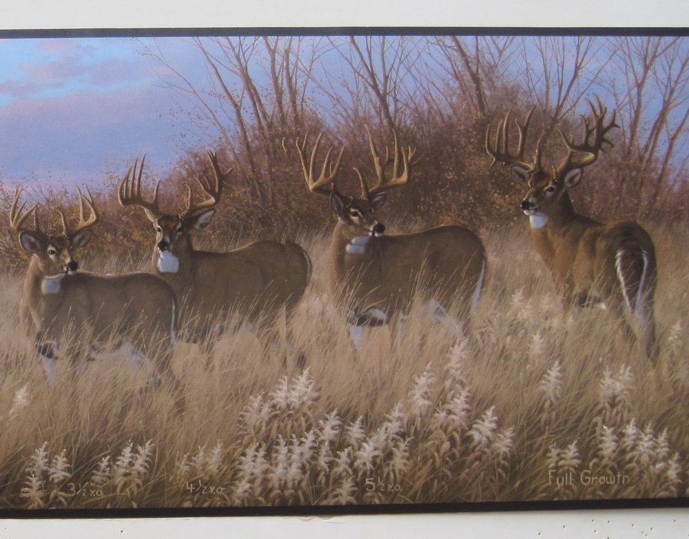 Deer Buck Doe Hunting Outdoors Wildlife Wallpaper Border 9 eBay 1000x783