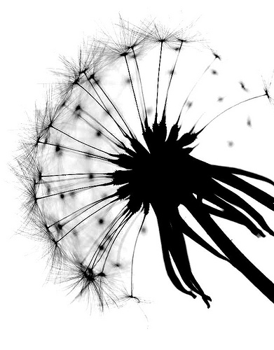 Dandelion Clock Silhouette HD Walls Find Wallpapers 391x500