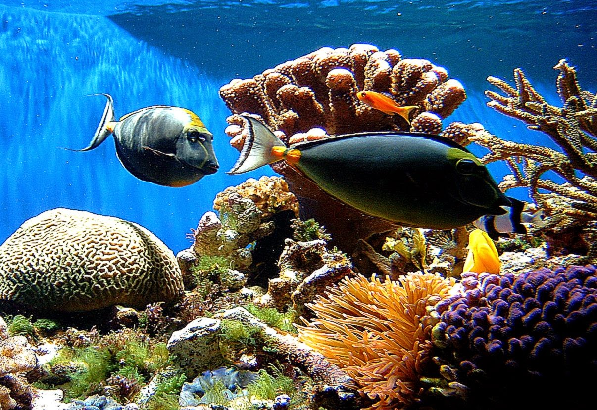 Coral Reefs Wallpaper Best Background Wallpaper 1206x829
