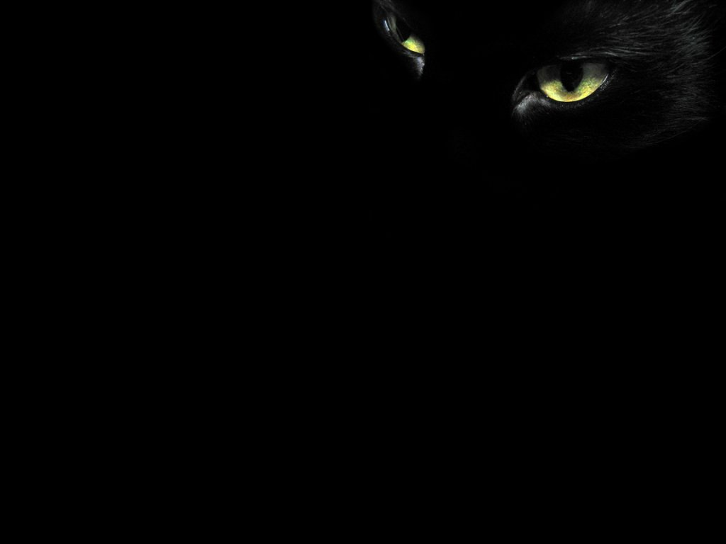 Black Cat Eyes   Wallpapers 1024x768