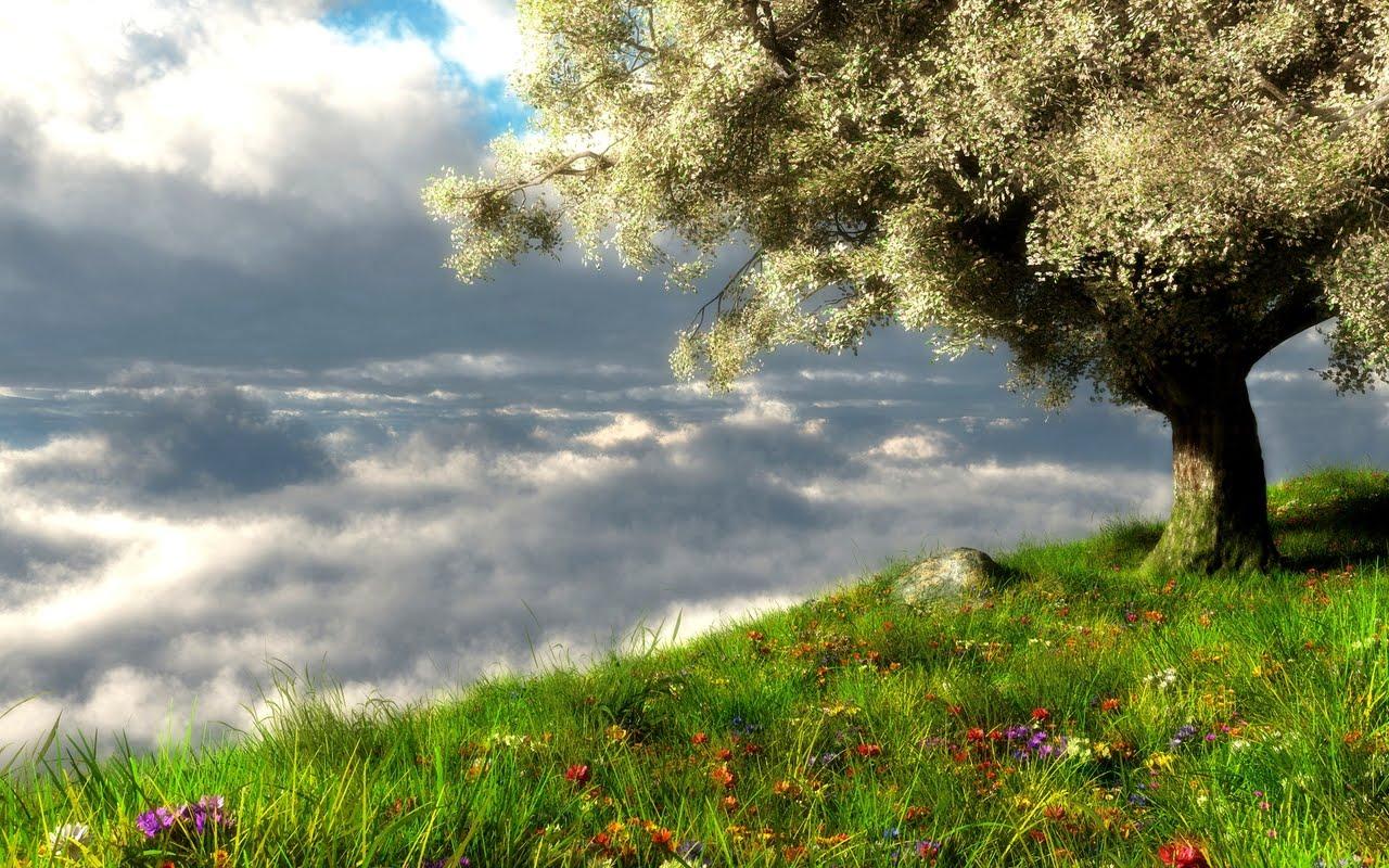 Spring Landscape Wallpaper Hd Desktop Wallpaper 1280x800