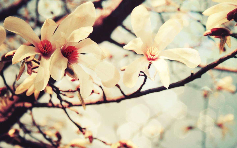 Free Download Papel De Parede Flores De Primavera Wallpaper