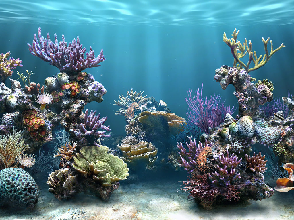 coral reef wallpaper 1024x768