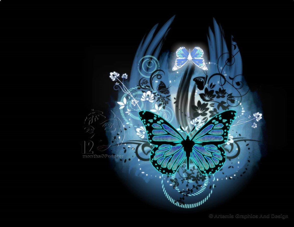 Free Download Most Beautiful Butterflies Wallpaper My Image