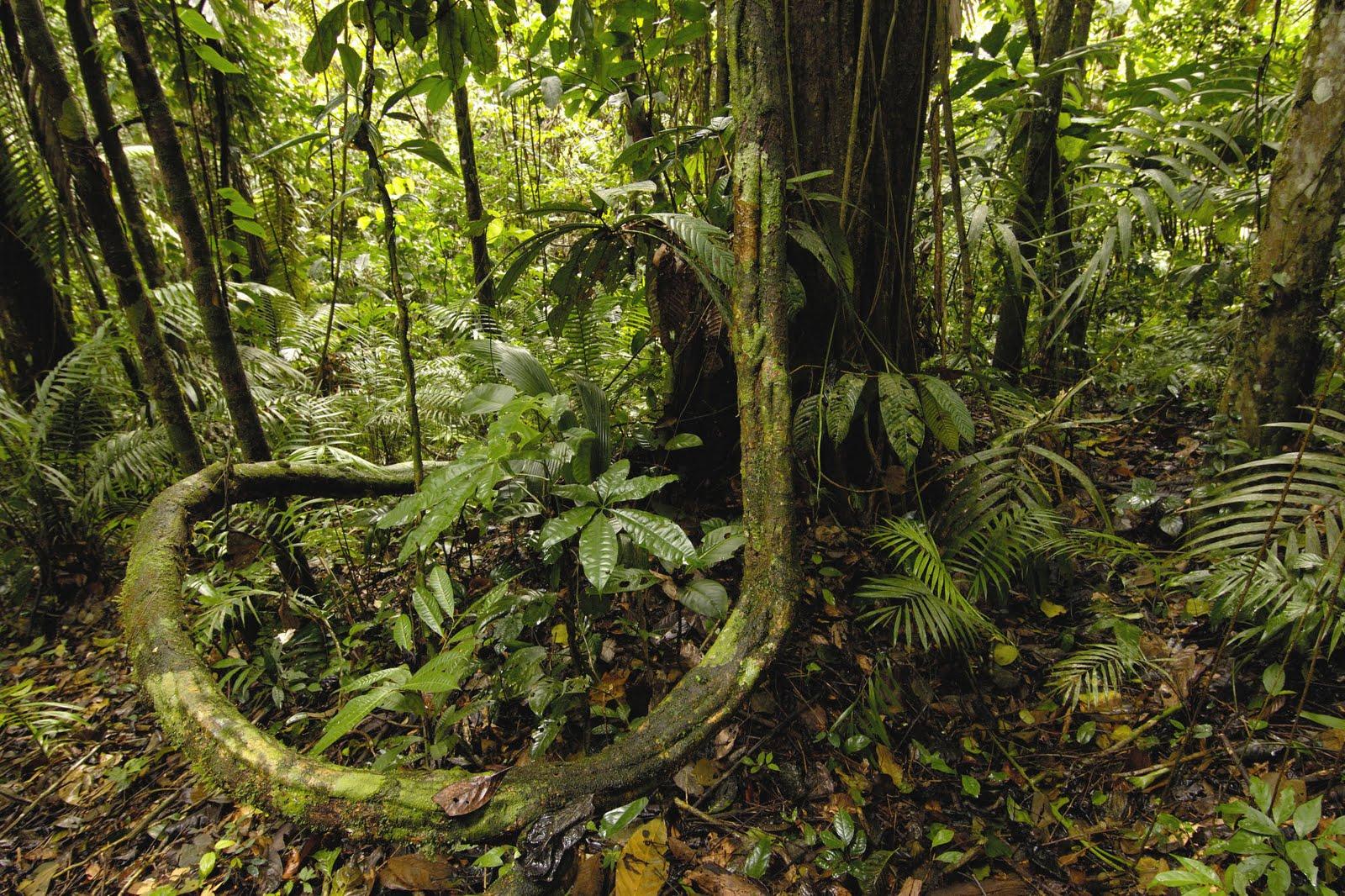 Amazon Rainforest View World Beauty 1600x1066