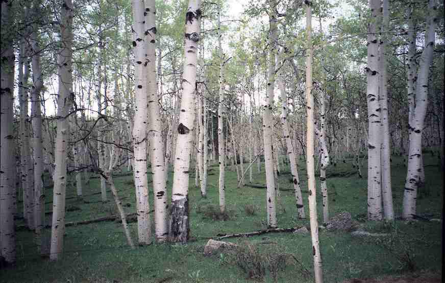 Benefits of Birch Tar Soap The Mod Cabin 872x554
