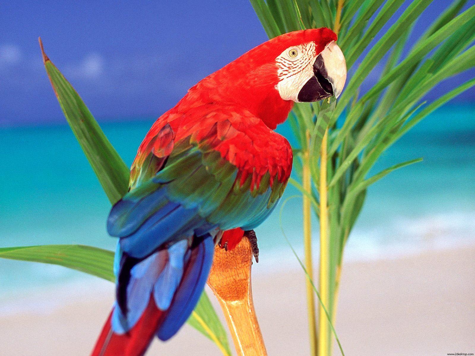 Parrot Parrot Background Wallpaper Animal Wallpapers birds 1600x1200