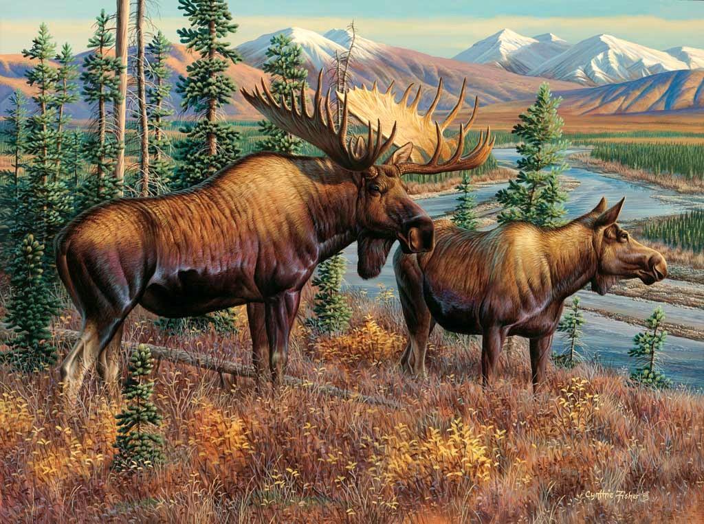 Majestic Moose wallpaper   ForWallpapercom 1024x763