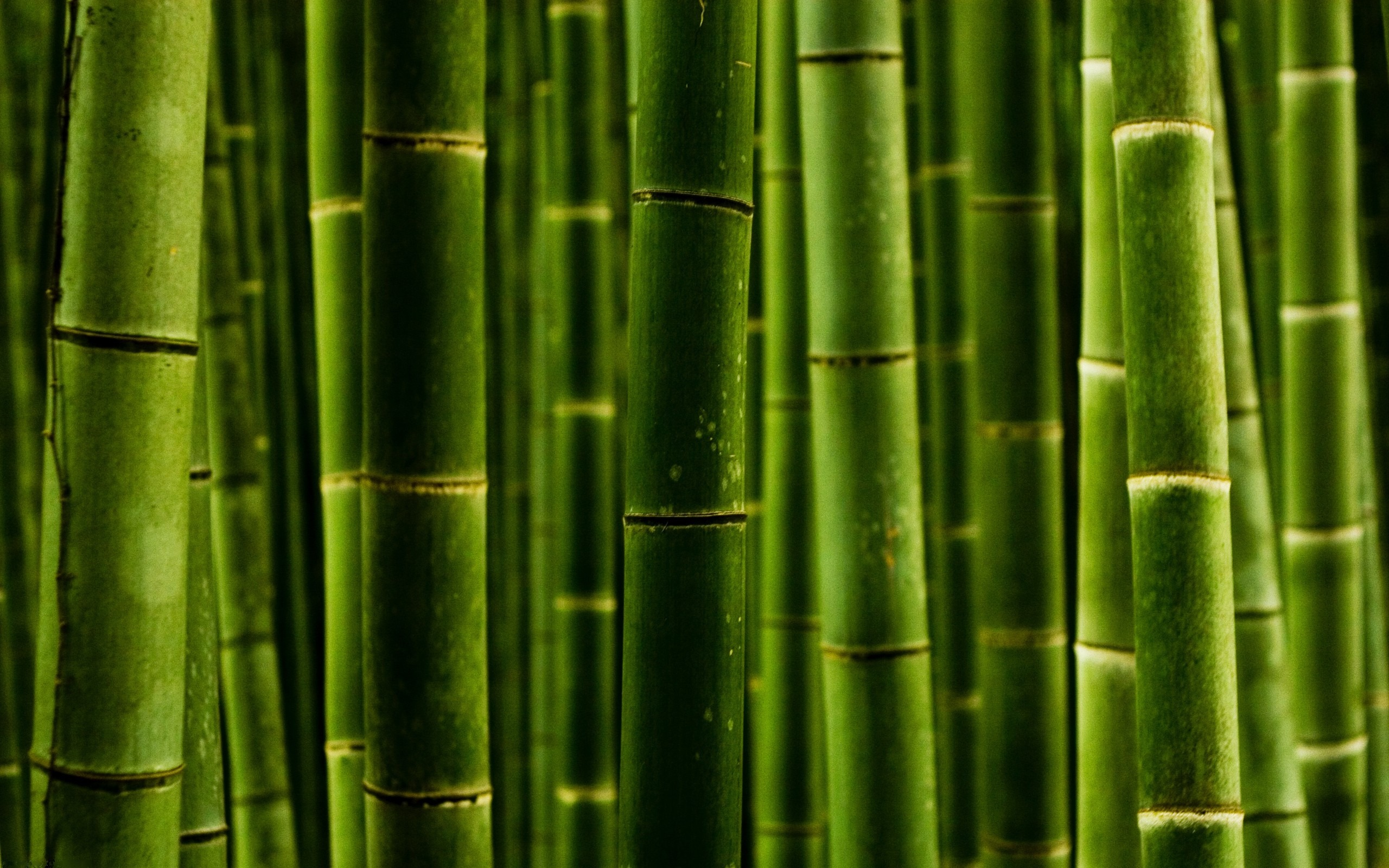 bamboo hd live wallpapers live wallpapers hd for android free
