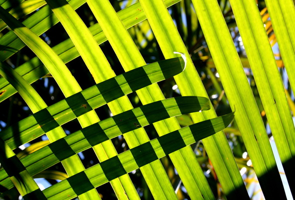 Wallpaper palm leaf desktop wallpaper Nature GoodWPcom 590x400