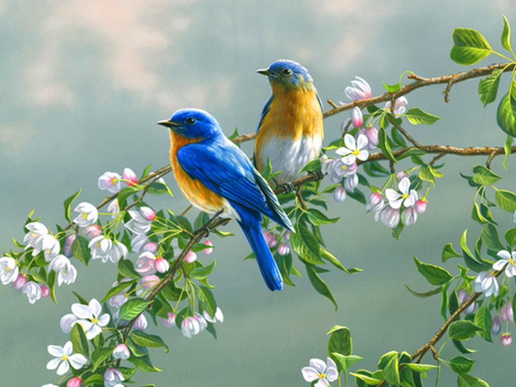 spring flowers and birds wallpaper wallpapersafari