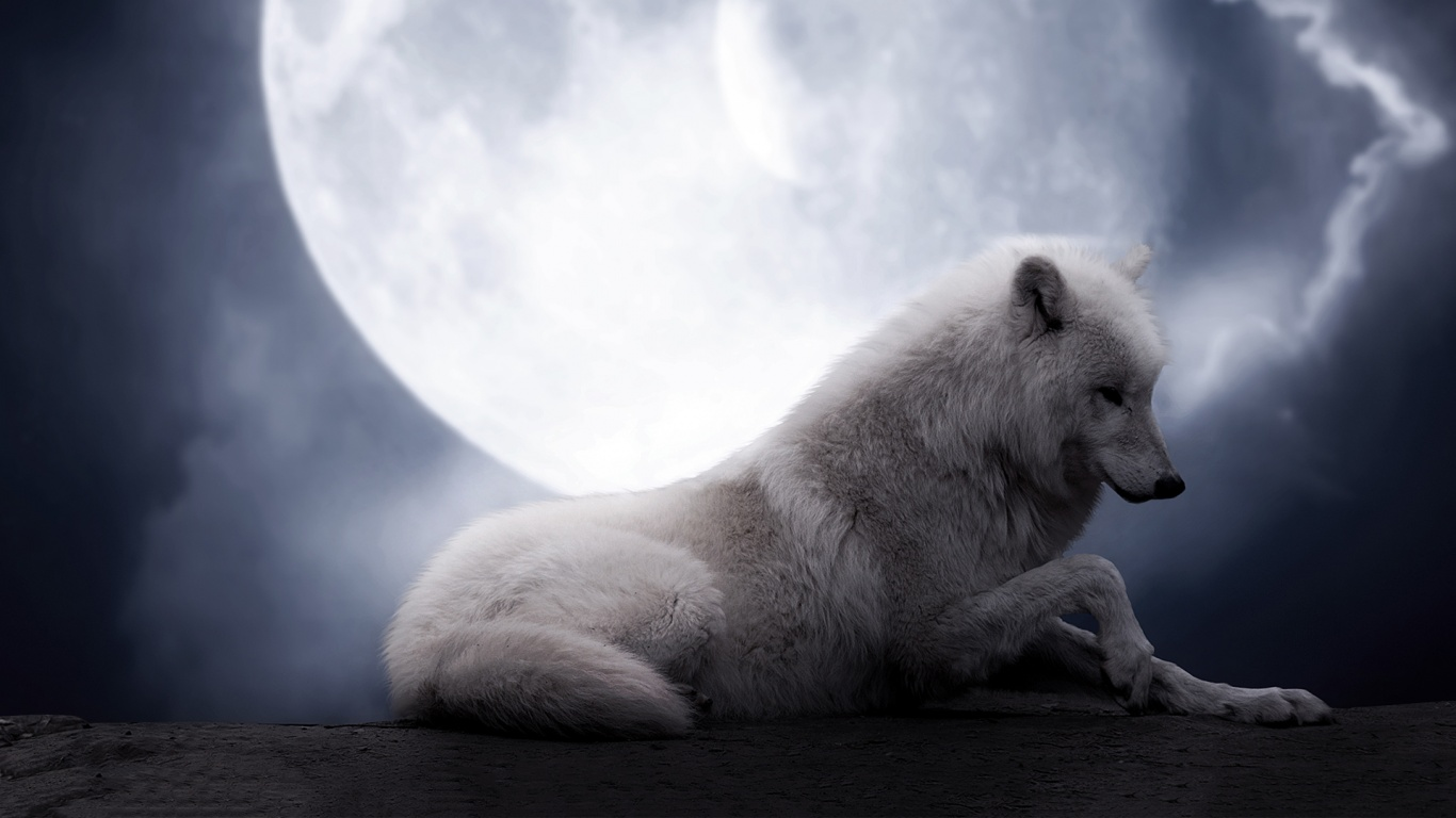 White Wolf Wallpaper 11330 Hd Wallpapers in Animals   Imagescicom 1366x768