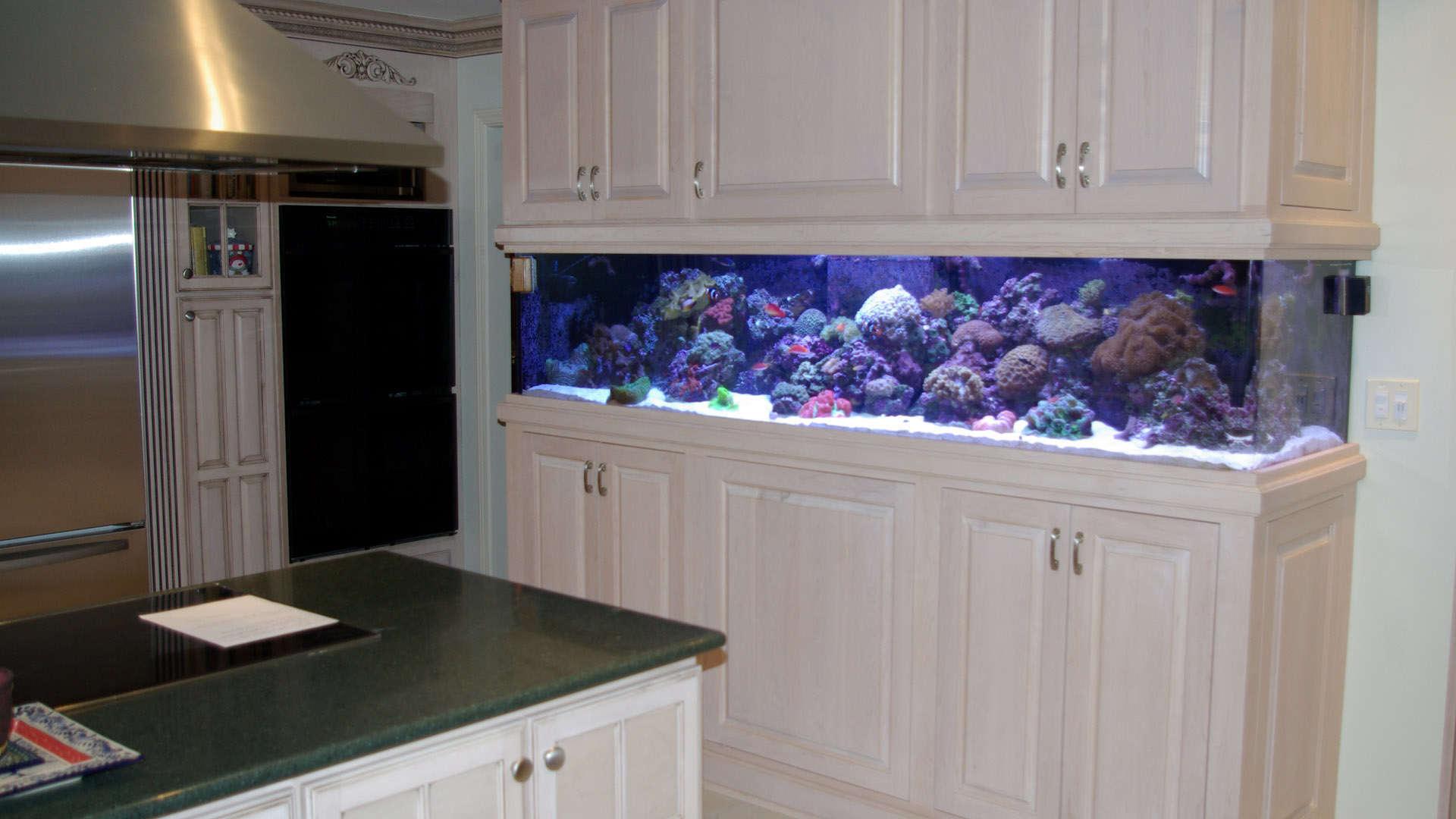 Aquarium Hd 1080p Wallpaper Wallpapersafari