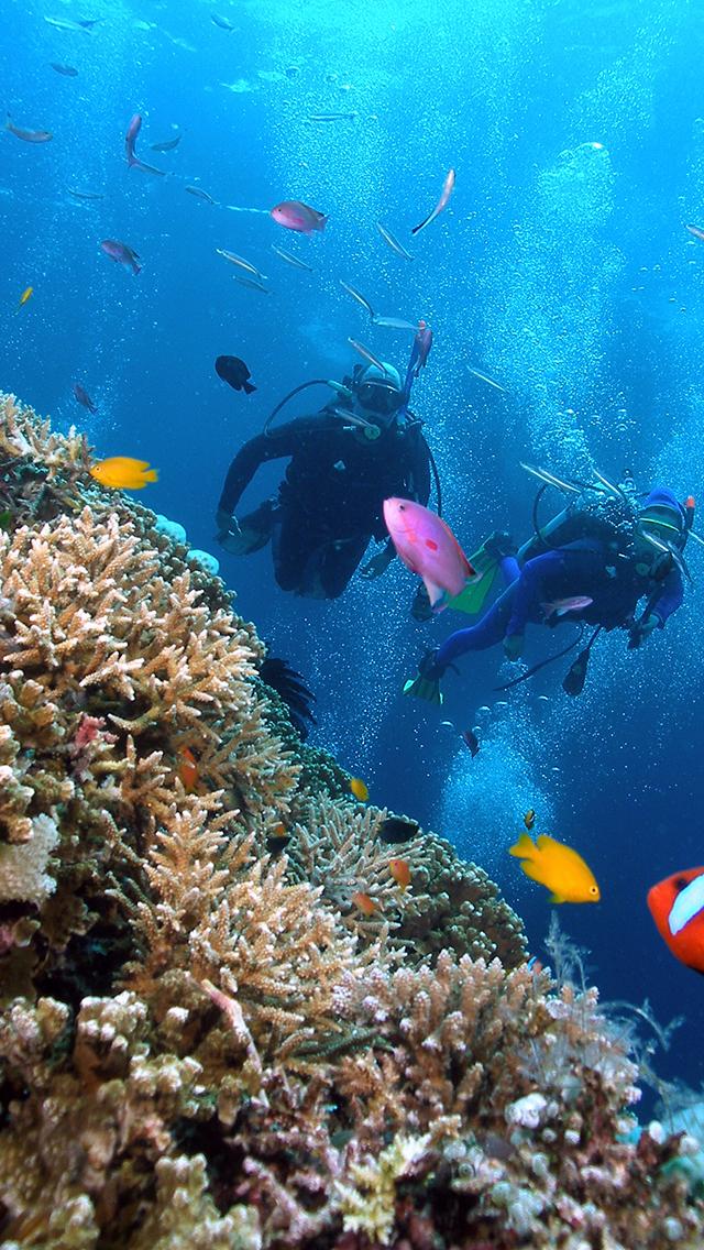 Coral Reef 640x1136