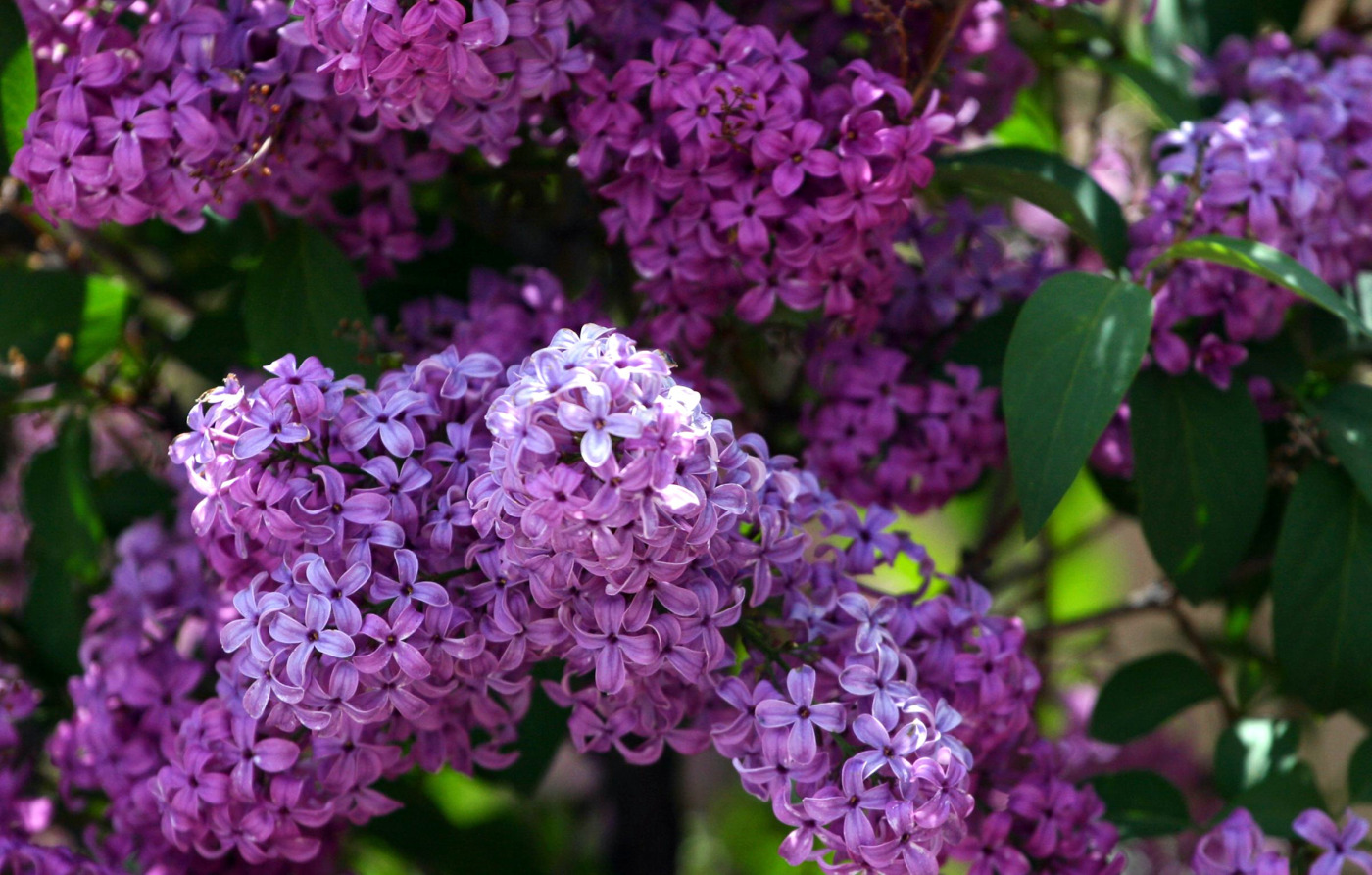 Tapeta mae fioletowe kwiatuszki Kwiaty Ziemia 1400x893