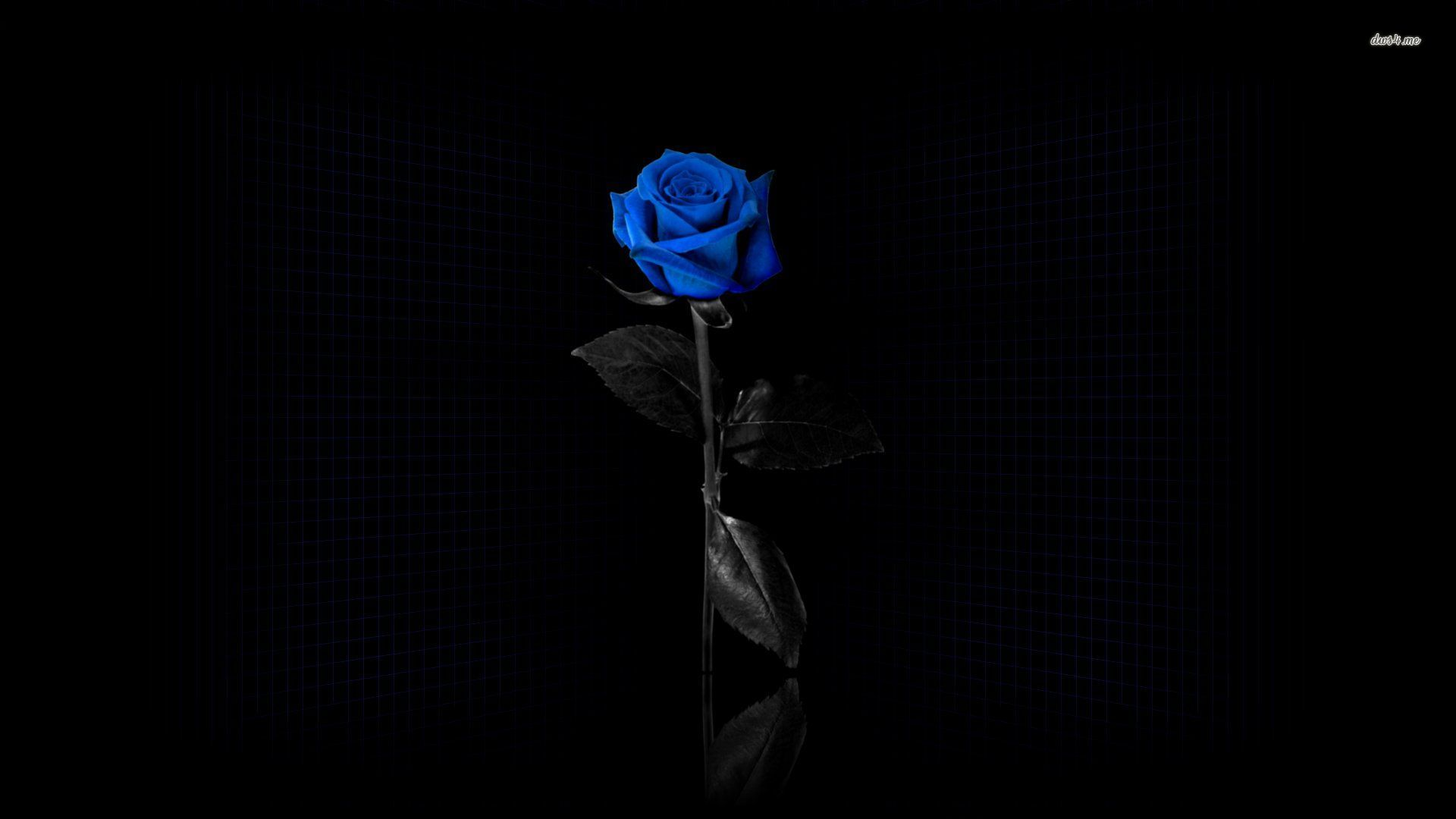 Blue Rose Wallpapers HD Pictures One HD Wallpaper Pictures 1920x1080