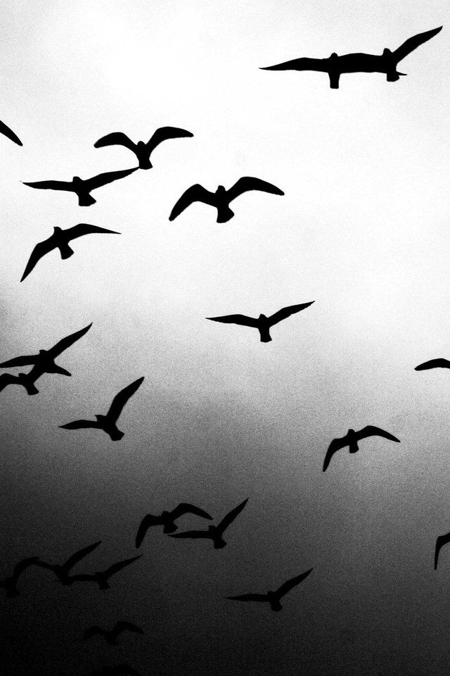 Flying Birds iPhone Wallpaper HD 640x960