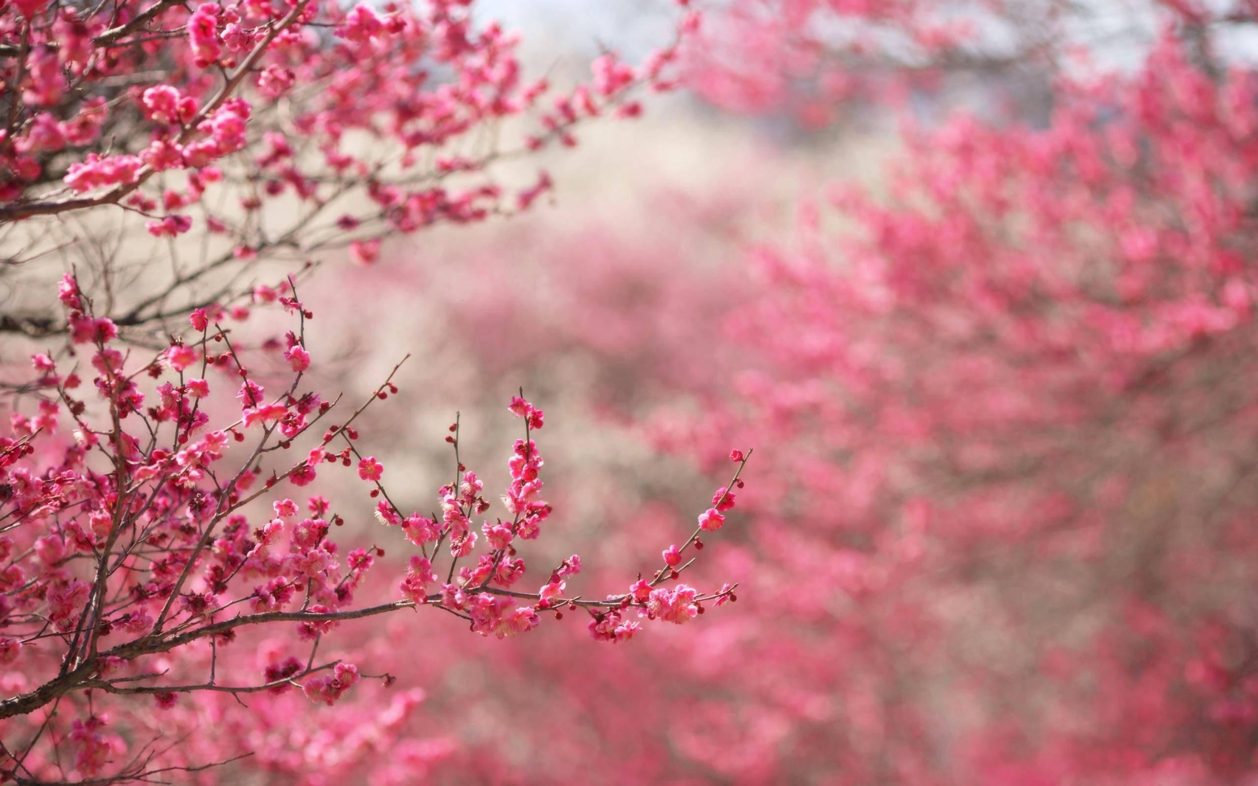 Spring Desktop Backgrounds AirWallpaperCom 2560x1600