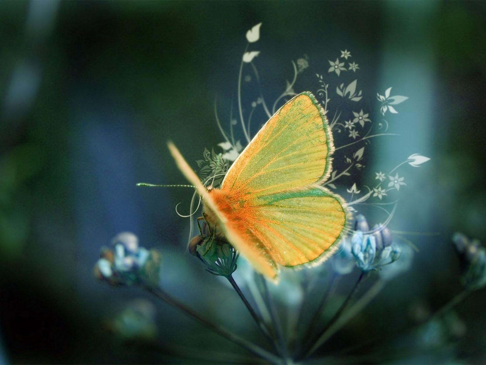 Orange Butterfly On Flower Desktop Wallpaper 1600x1200
