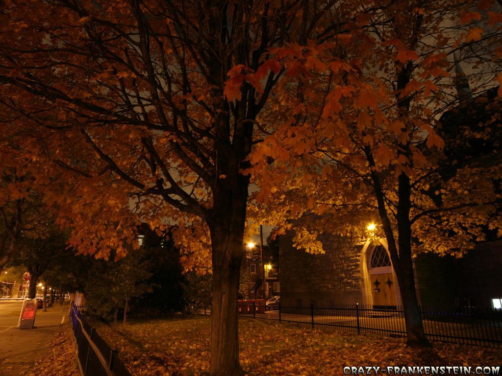Cool fall wallpapers wallpapersafari - Cool night nature backgrounds ...