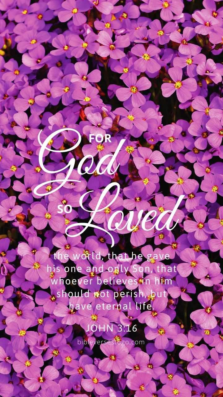Violets John 316 Bible Verses To Go 720x1280