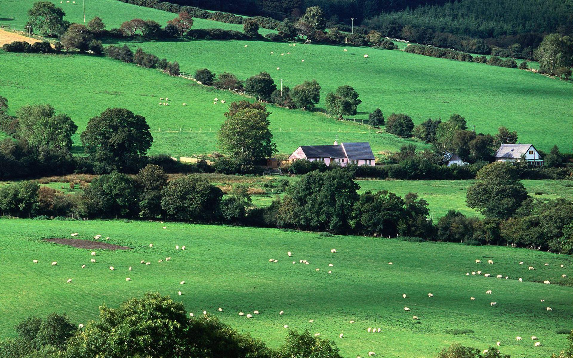 77 Irish Countryside Wallpaper On Wallpapersafari