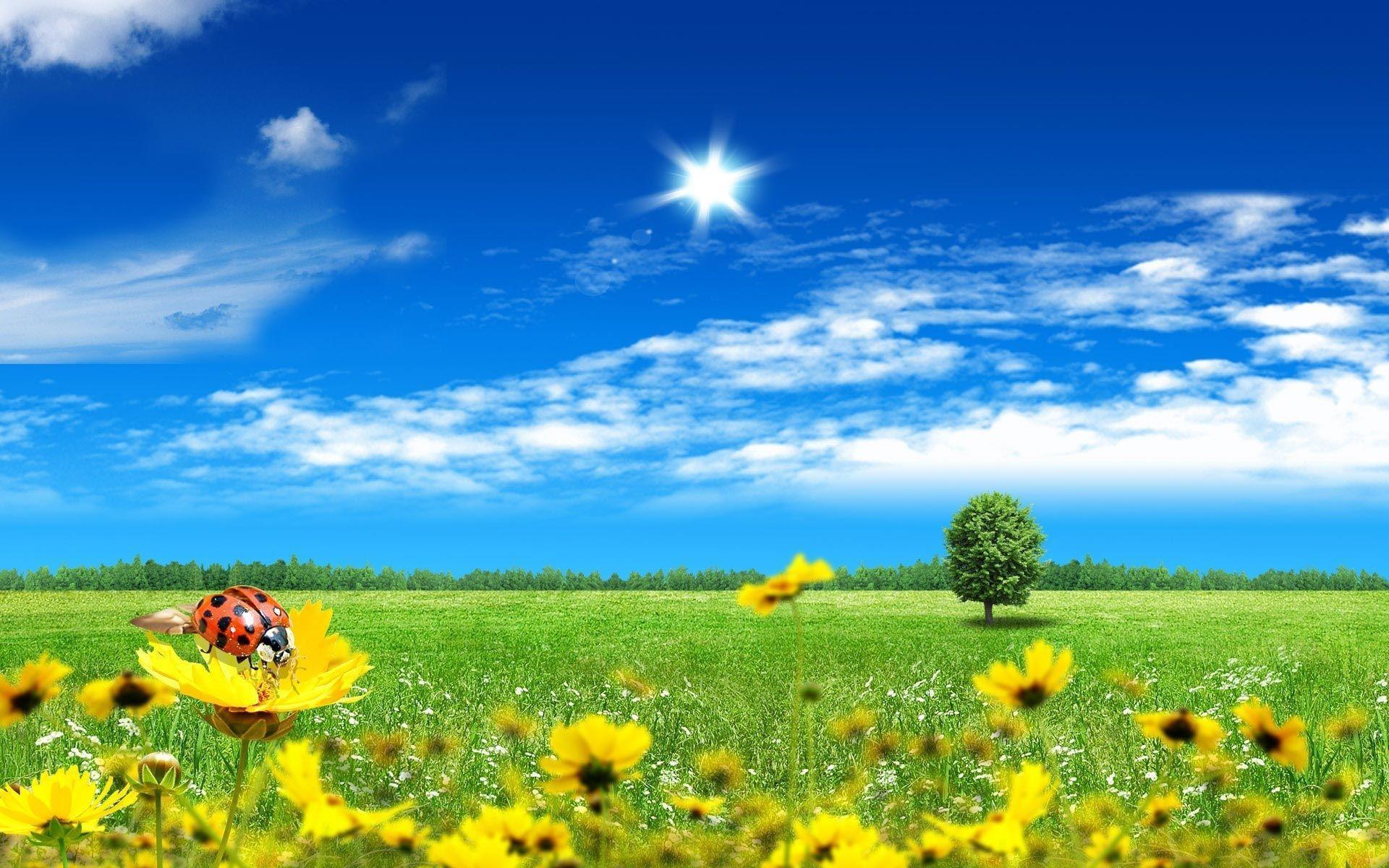Beautiful Sunny Day Wallpaper 1920x1200 33022 Kb   Picseriocom 1920x1200