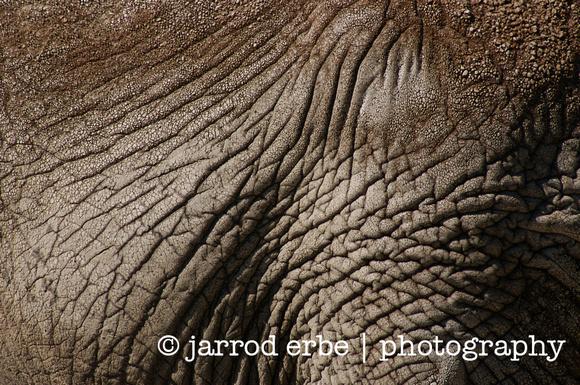 Elephant skin 2 580x385