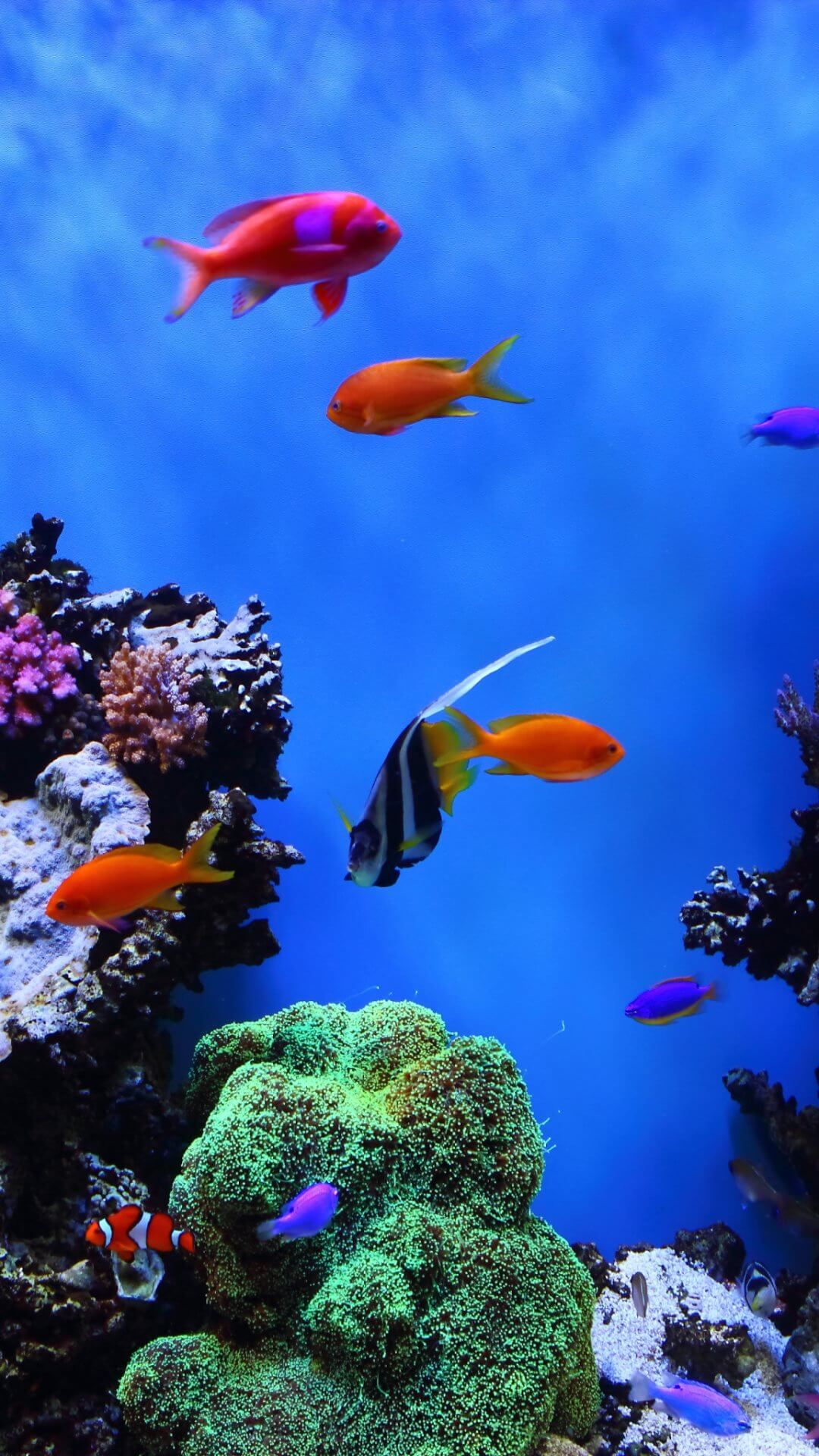 21+] Aquarium Wallpaper on WallpaperSafari